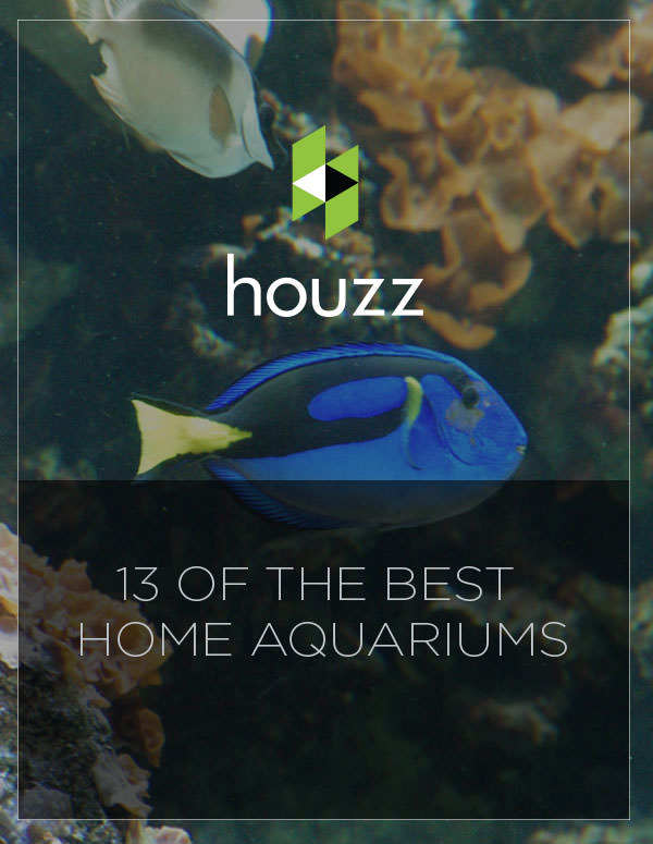 13 of the Best Home Aquariums